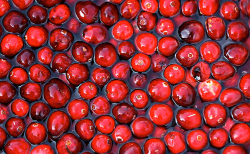 cranberry was ist das f r eine frucht. Black Bedroom Furniture Sets. Home Design Ideas