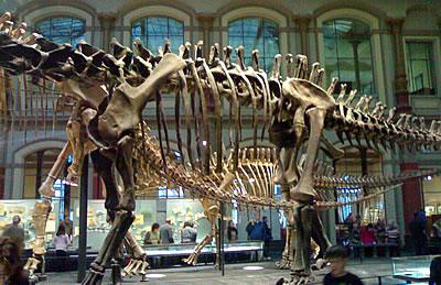 Dinosaurier-Skelett im Museum für Naturkunde in Berlin