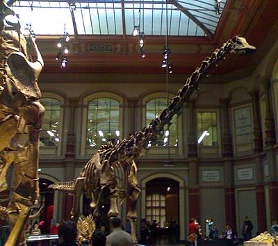 Saurier-Skelett im Naturkunde-Museum Berlin