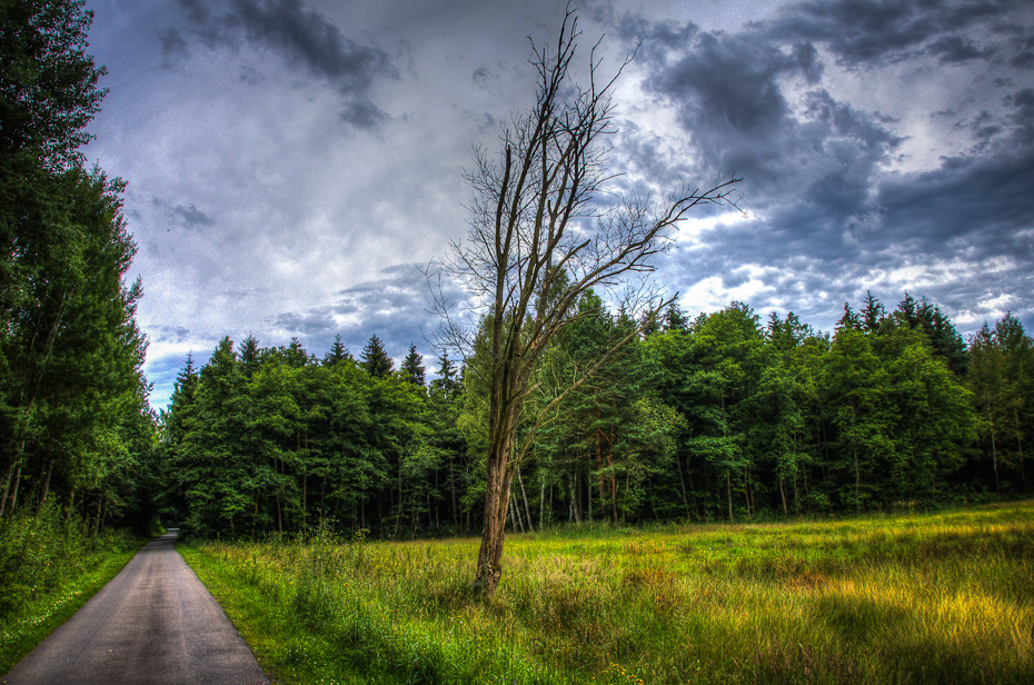 Waldweg - Uckermärkischer Radrundweg - nähe L23