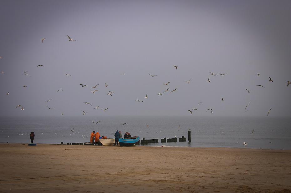 Fischer sortieren (umgarnt von Möwen) ihren Fang