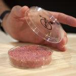 Fleisch aus dem Reagenzglas