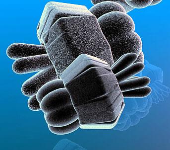 Zellen im Labor züchten (Symbolbild)