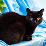 Befreundete Katze Lisa
